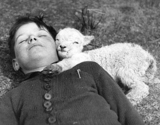 nene y oveja