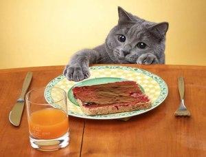 cena del gato