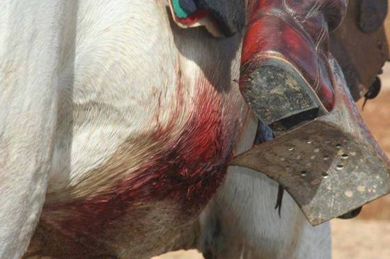 caballo abuso